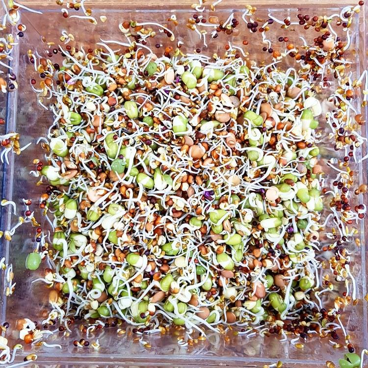 Blanda frön innan odling av groddar och microgreens – Groddjonas