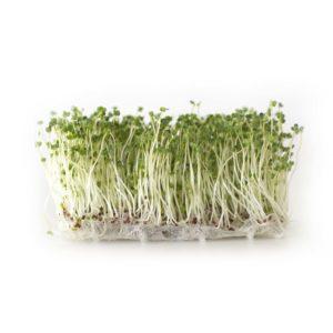 Broccolifrön (Calabrese) EKO 160g – 1kg