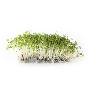 Grönkålsfrön EKO 160g – 500g