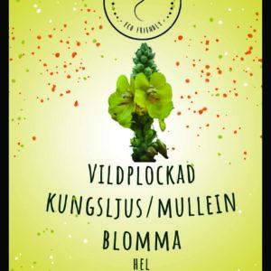Kungsljus/Mullein blomma hel VILDPLOCKAD 100 g