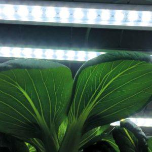 Växtbelysning LED 60cm 15W med adapter för microgreens och bladsallad